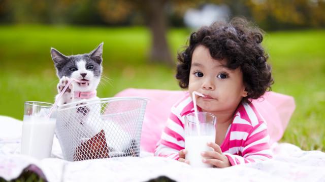 Gatos e bebés: Saiba o que fazer para que partilhem o espaço em segurança