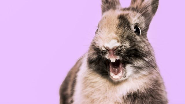 Aproxima-se o fim dos testes em animais em todo o mundo