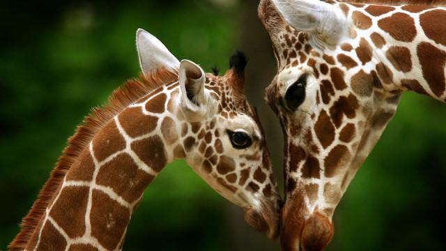 Vida animal: Momentos de ternura entre as mães e as crias