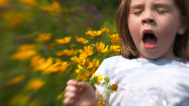 Pólenes muito elevados em quase todo o país nos próximos dias