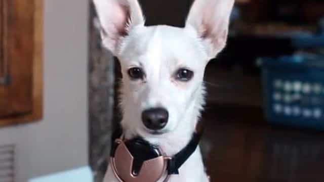 Há um projeto que quer dar ao seu cão um smartphone