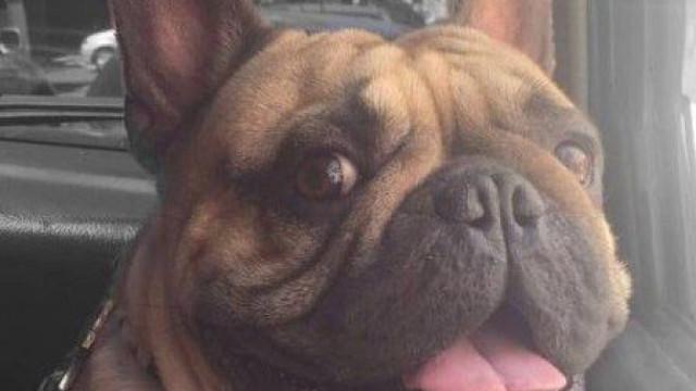 Gang armado rouba cão a homem que passeava na rua