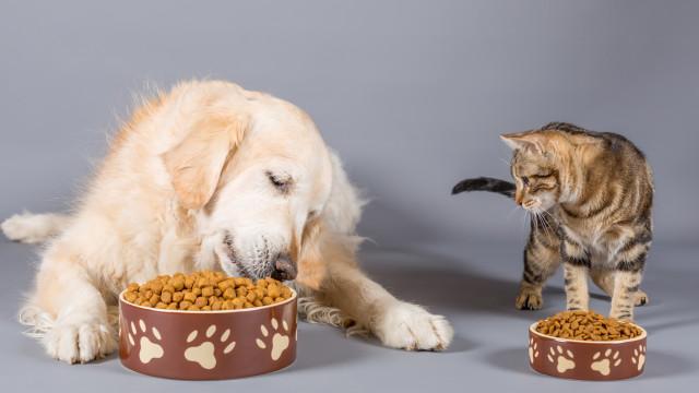 Lei que regula venda de animais entra amanhã em vigor