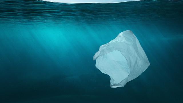 No Dia Mundial dos Oceanos, saiba como ajudar. É urgente