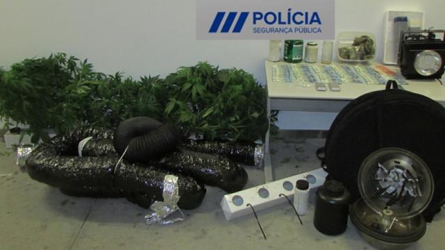Cultivavam canábis e foram detidos pela PSP