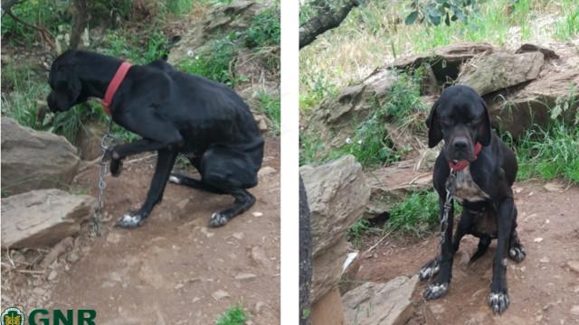 Mais de 20 cães resgatados pela GNR. Não tinham água nem comida