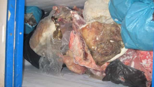 Quase 128 kg de javali impróprios para consumo apreendidos em restaurante