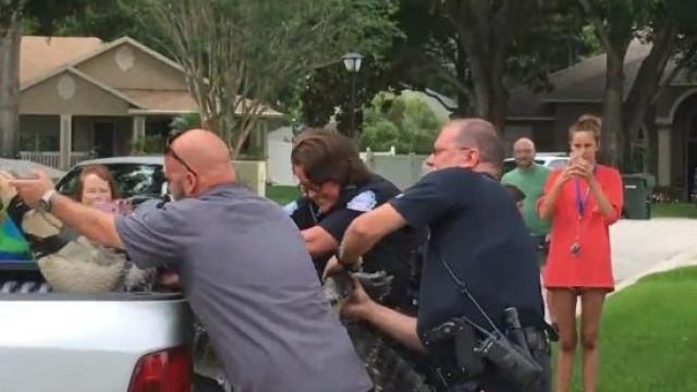 Mesmo após ser capturado, 'cabeçada' de jacaré deixa homem inconsciente