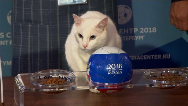 Gato 'vidente' prevê vencedor de jogo de abertura do Mundial. Será mesmo?