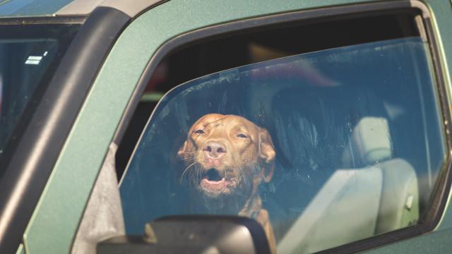 Não deixe animais no carro. Esta é a temperatura do seu carro à sombra