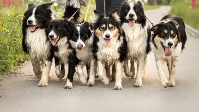 Por muito que os seus donos o queiram, os cães não reconhecem a sua raça