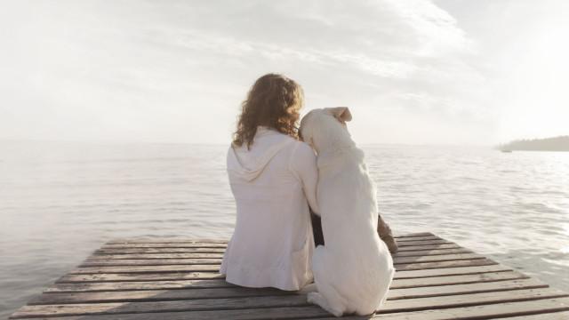 A perda de um animal de estimação tem de ser levada mais a sério