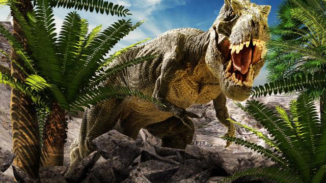 Investigadores dizem que T-Rex tinha a língua colada no fundo da boca