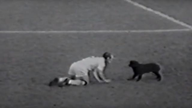 Um cão decidiu jogar o Mundial e converteu-se no 'amuleto' do Brasil