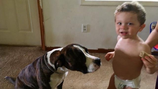 Cão ajuda a salvar vida de bebé desaparecido nos EUA