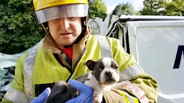 Cãozinho bebé salvo miraculosamente de choque em cadeia no Reino Unido