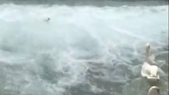 Homem salva cisne bebé de se afogar numa fonte em França