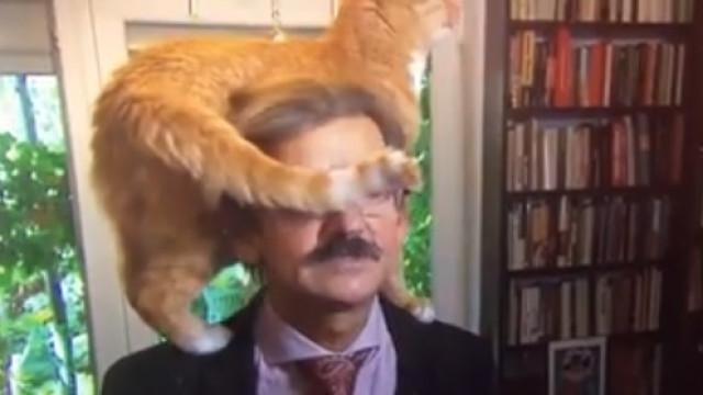 Gato assume protagonismo em entrevista de cientista político