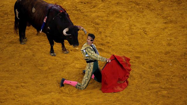 Touro arranca o couro cabeludo a toureiro em Espanha
