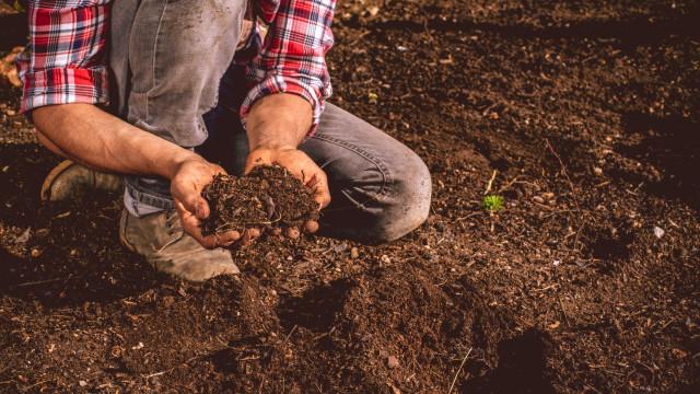 Governo consagra estatuto da agricultura familiar