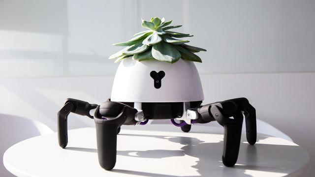 Este pequeno 'robot aranha' vai ajudá-lo a cuidar das suas plantas