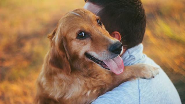 Atenção, os cães podem transmitir esta doença aos humanos