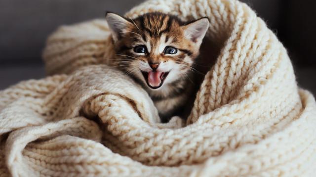 O seu animal é feliz? De certeza?