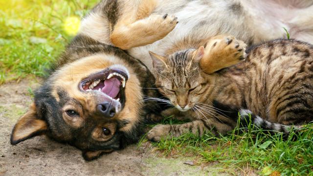As adoráveis relações de amizade na vida animal