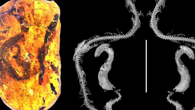 """Descoberta """"incrivelmente rara"""" de cobra bebé da era do dinossauros"""