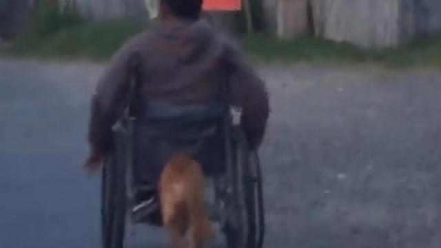 A lealdade de um cão que empurra a cadeira de rodas do dono