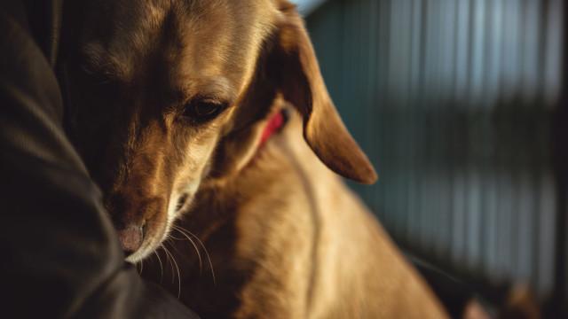 É amor: Cães fazem tudo por tudo para o animar quando está triste