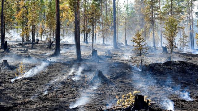 Suecos cada vez mais preocupados com clima a um mês das legislativas