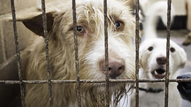 """Oeiras vê investimento em animais como política para """"eliminar problemas"""""""