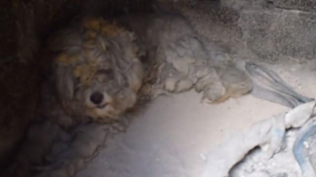 Cão escondeu-se num forno dois dias e sobreviveu ao fogo de Mati