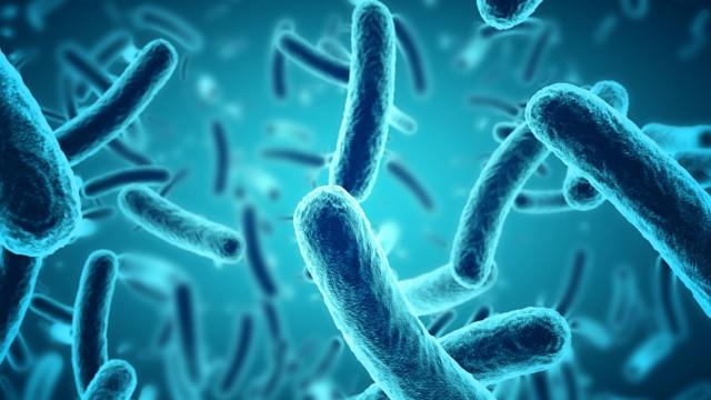 Bactérias que produzem eletricidade perto de serem usadas na tecnologia