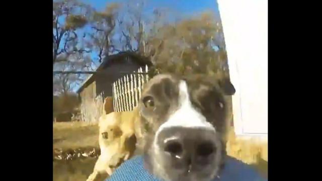 Cão rouba GoPro no mais recente vídeo viral que tem de ver