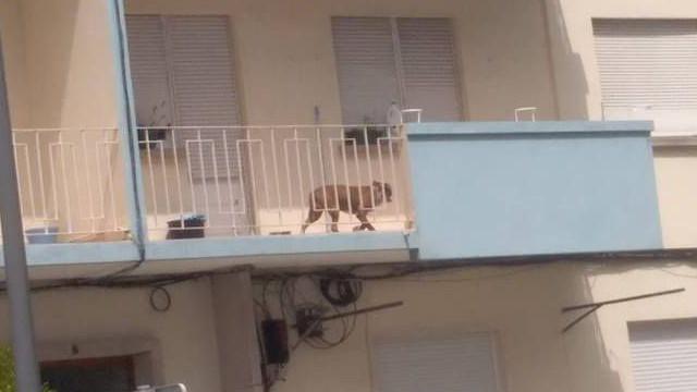 """Cão preso em varanda em dia de 40ºC leva a """"dezenas"""" de chamadas à PSP"""