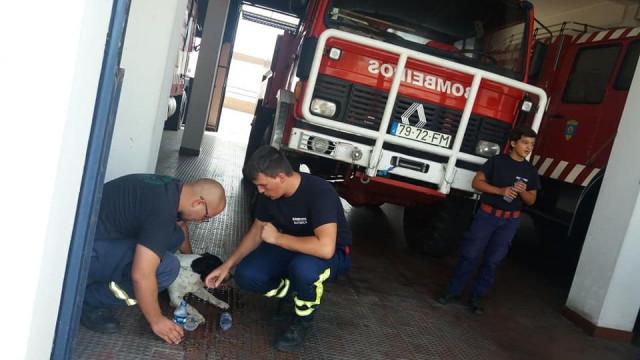 """Estes bombeiros tiveram uma vítima diferente """"mas igual a tantas outras"""""""
