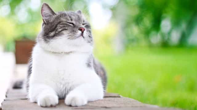 Sete dicas para ter um gato feliz e saudável