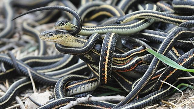 Cobras a aparecerem nas estantes obrigam biblioteca a fechar
