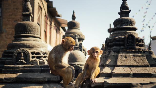 Vai de férias no outono? Opte pelo Nepal: Leveza no espírito e na mochila