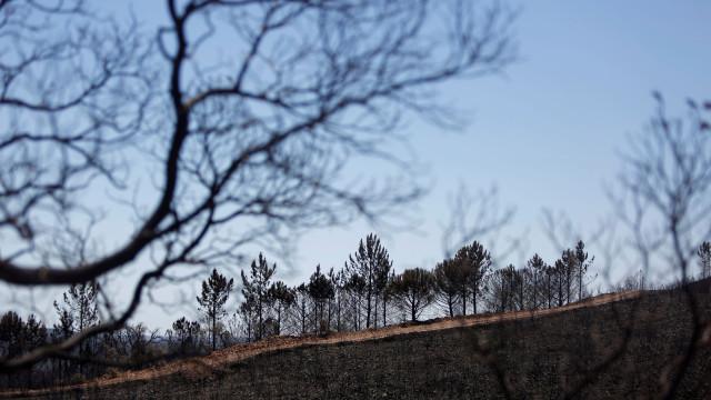 Autarca estima em cerca de 10 mil hectares a área ardida em Silves