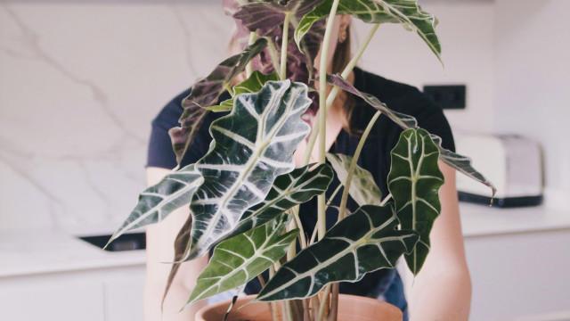 Plantas em casa? Seis variedades que resistem ao verão