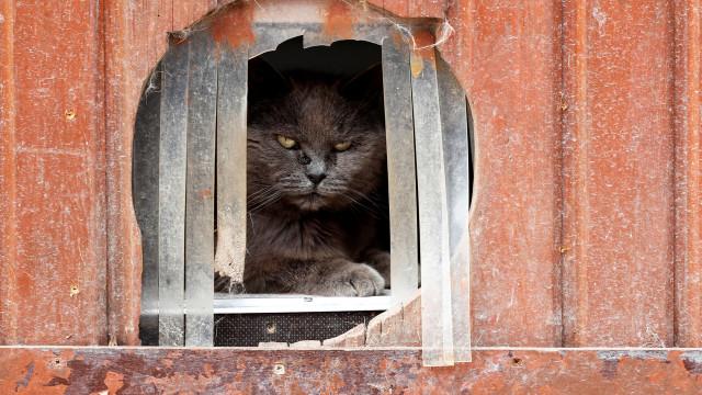 'Les Petits Vieux'. Na Bélgica, existe um lar de idosos para animais