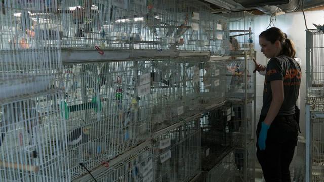 Mais de 600 aves removidas de habitação nos EUA
