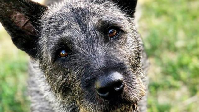 Emigrante português julgado nos EUA por queimar cadela com ferro