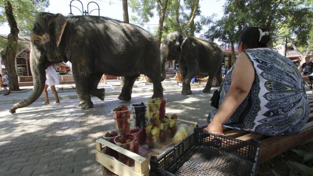 Depois do trabalho, elefantes vão a banhos... na praia