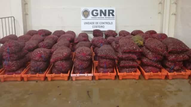 Apreendidas quase três toneladas de bivalves em Viana do Castelo