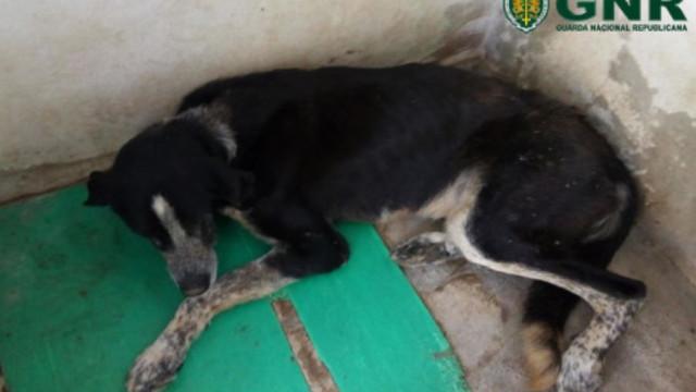 Cão abandonado recolhido da rua em estado debilitado e com ferimentos