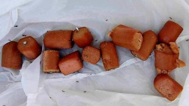 Polícia espanhola alerta para comida deixada em parques para matar cães
